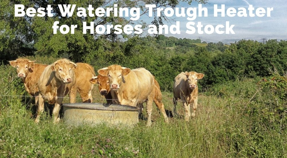 Best Watering Trough Heater for Horses and Stock